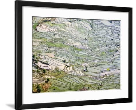 Flooded Laohu Zui Rice Terraces, Mengpin Village, Yuanyang County, Yunnan, China-Charles Crust-Framed Art Print
