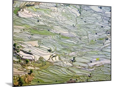 Flooded Laohu Zui Rice Terraces, Mengpin Village, Yuanyang County, Yunnan, China-Charles Crust-Mounted Photographic Print