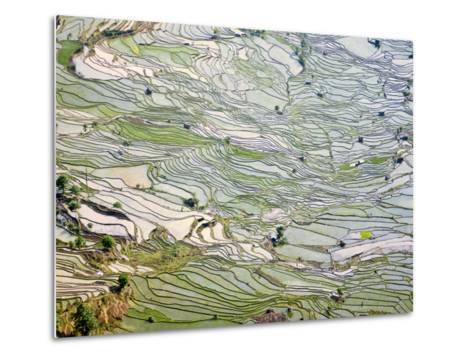 Flooded Laohu Zui Rice Terraces, Mengpin Village, Yuanyang County, Yunnan, China-Charles Crust-Metal Print
