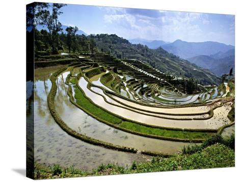 Flooded Rice Terraces, Panzhihua Village, Yuanyang County, Yunnan Province, China-Charles Crust-Stretched Canvas Print