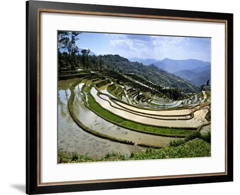 Flooded Rice Terraces, Panzhihua Village, Yuanyang County, Yunnan Province, China-Charles Crust-Framed Art Print