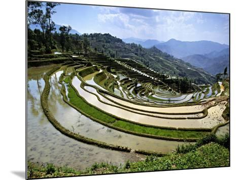 Flooded Rice Terraces, Panzhihua Village, Yuanyang County, Yunnan Province, China-Charles Crust-Mounted Photographic Print