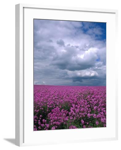 Field of Dames Rocket and Clouds, Oregon, USA-Julie Eggers-Framed Art Print