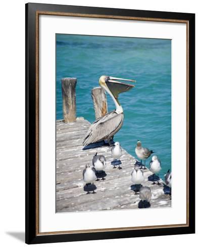 Pelican, Isla Mujeres, Quintana Roo, Mexico-Julie Eggers-Framed Art Print