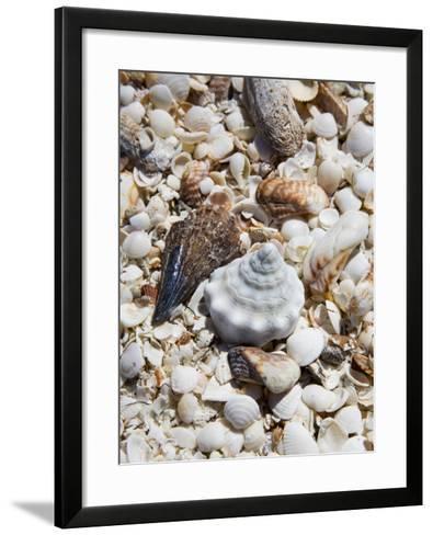 Shells on The Beach, Puerto Telchac, Mexico-Julie Eggers-Framed Art Print