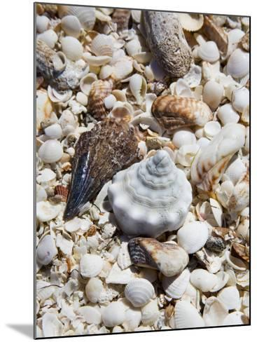 Shells on The Beach, Puerto Telchac, Mexico-Julie Eggers-Mounted Photographic Print