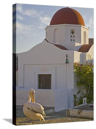 White Pelican Preening, Hora, Mykonos, Greece-Darrell Gulin-Stretched Canvas Print