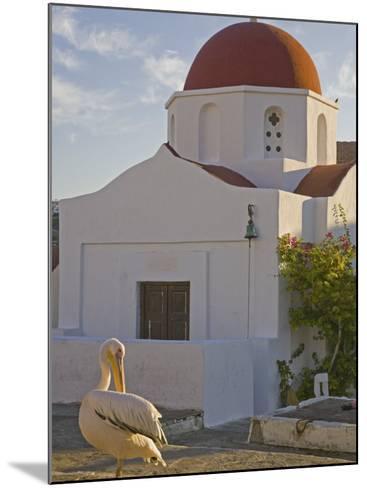 White Pelican Preening, Hora, Mykonos, Greece-Darrell Gulin-Mounted Photographic Print