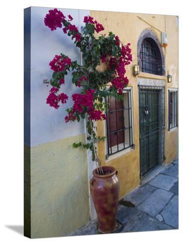 Bougenvillia Vine in Pot, Oia, Santorini, Greece-Darrell Gulin-Stretched Canvas Print