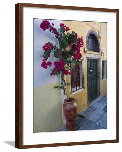Bougenvillia Vine in Pot, Oia, Santorini, Greece-Darrell Gulin-Framed Art Print