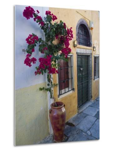 Bougenvillia Vine in Pot, Oia, Santorini, Greece-Darrell Gulin-Metal Print