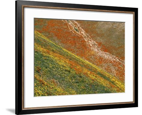 Wildflowers, Tehachapi Mountains, California, USA-Charles Gurche-Framed Art Print