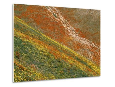 Wildflowers, Tehachapi Mountains, California, USA-Charles Gurche-Metal Print