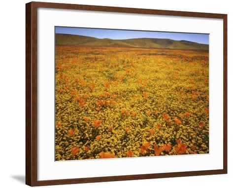 Lupine and California Poppies, Tehachapi Mountains, California, USA-Charles Gurche-Framed Art Print