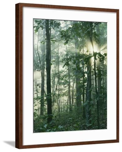 Oak Forest in morning fog, Mark Twain National Forest, Missouri, USA-Charles Gurche-Framed Art Print