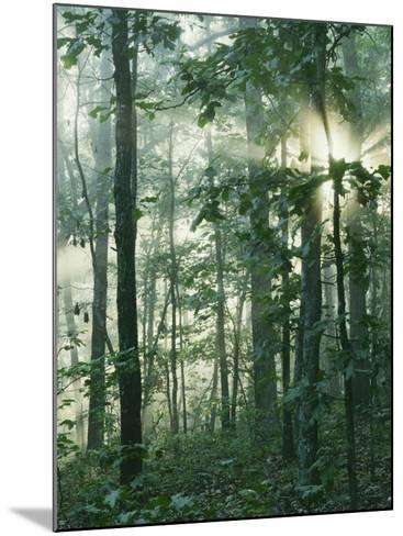 Oak Forest in morning fog, Mark Twain National Forest, Missouri, USA-Charles Gurche-Mounted Photographic Print