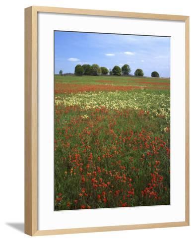 Indian Paintbrush meadow, Taberville Prairie Natural Area, Missouri, USA-Charles Gurche-Framed Art Print
