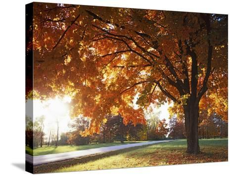 Sugar Maple, Fleming Park, Jackson County, Missouri, USA-Charles Gurche-Stretched Canvas Print
