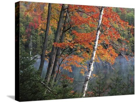 Paper Birch and Red Maple along Heart Lake, Adirondack Park and Preserve, New York, USA-Charles Gurche-Stretched Canvas Print