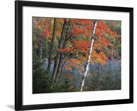 Paper Birch and Red Maple along Heart Lake, Adirondack Park and Preserve, New York, USA-Charles Gurche-Framed Art Print