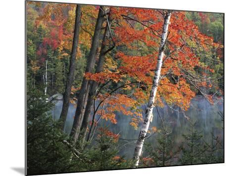 Paper Birch and Red Maple along Heart Lake, Adirondack Park and Preserve, New York, USA-Charles Gurche-Mounted Photographic Print