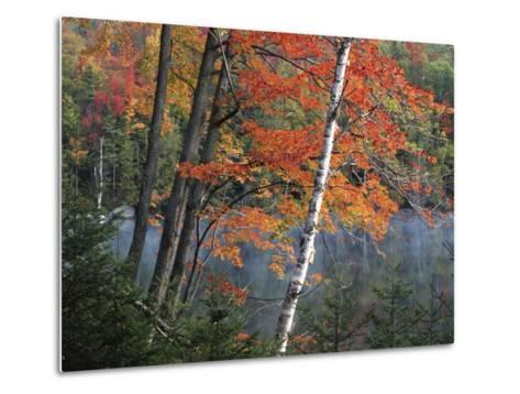 Paper Birch and Red Maple along Heart Lake, Adirondack Park and Preserve, New York, USA-Charles Gurche-Metal Print