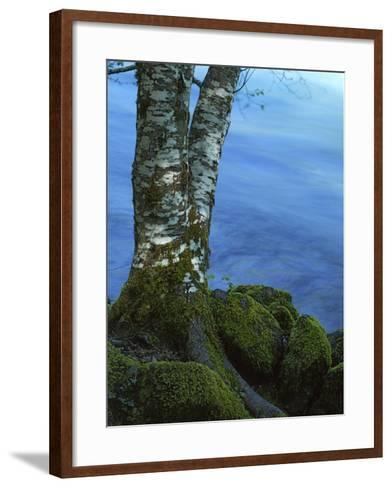 Alder Trunk along the McKenzie River, Willamette National Forest, Oregon, USA-Charles Gurche-Framed Art Print