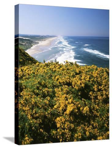 Lane County, Pacific Coast, Oregon, USA-Charles Gurche-Stretched Canvas Print