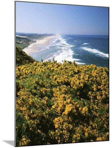 Lane County, Pacific Coast, Oregon, USA-Charles Gurche-Mounted Photographic Print