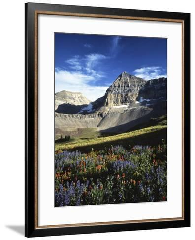 Wildflower meadows below Mt. Timpanogos, Uinta-Wasatch-Cache National Forest, Utah, USA-Charles Gurche-Framed Art Print