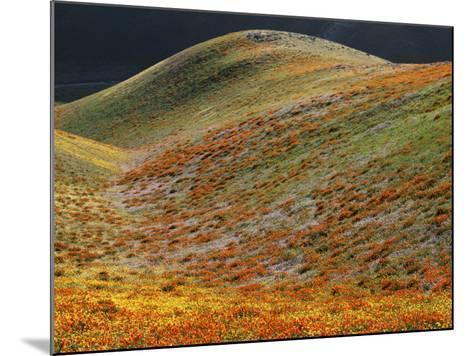 Wildflowers, Tehachapi Mountains, California, USA-Charles Gurche-Mounted Photographic Print