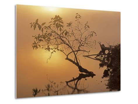 Buttonbush at dawn, Lake of the Ozarks, Missouri, USA-Charles Gurche-Metal Print