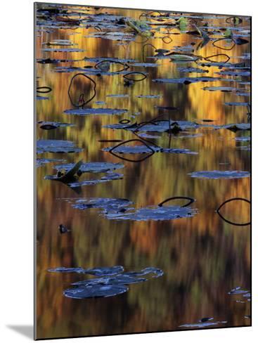 American Lotus in Autumn, Lake of the Ozarks, Missouri, USA-Charles Gurche-Mounted Photographic Print