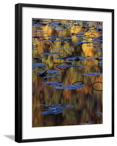American Lotus in Autumn, Lake of the Ozarks, Missouri, USA-Charles Gurche-Framed Art Print