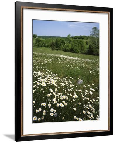 Daisy Meadow, Saline County, Missouri, USA-Charles Gurche-Framed Art Print