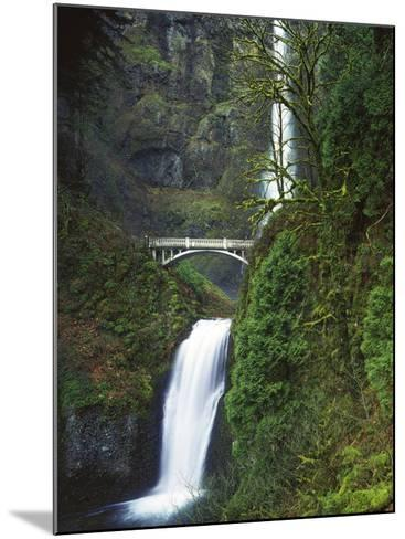 Multnomah Falls, Columbia Gorge National Scenic Area, Oregon, USA-Charles Gurche-Mounted Photographic Print