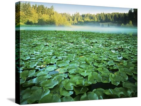 Fowler's Pond Preserve, Orcas Island, Washington, USA-Charles Gurche-Stretched Canvas Print