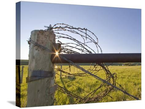 Barbed Wire Rolled Up, Lewistown, Montana-Chuck Haney-Stretched Canvas Print