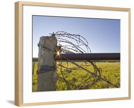 Barbed Wire Rolled Up, Lewistown, Montana-Chuck Haney-Framed Art Print
