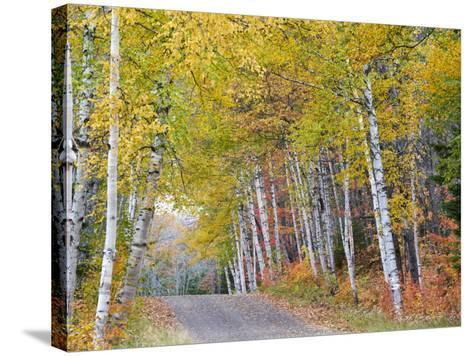Fall Color Lines Gravel Road, Keweenaw Penninsula, Michigan, USA-Chuck Haney-Stretched Canvas Print