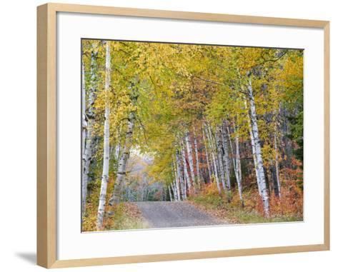 Fall Color Lines Gravel Road, Keweenaw Penninsula, Michigan, USA-Chuck Haney-Framed Art Print