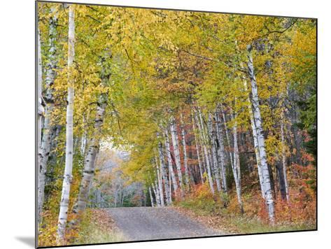 Fall Color Lines Gravel Road, Keweenaw Penninsula, Michigan, USA-Chuck Haney-Mounted Photographic Print