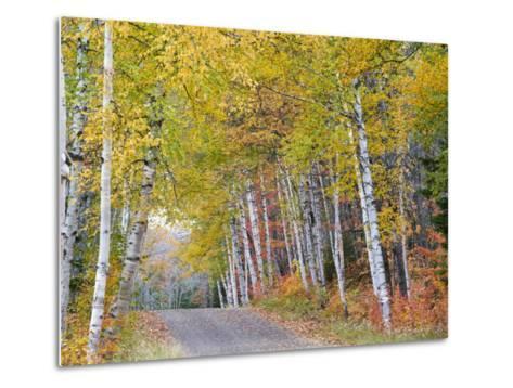 Fall Color Lines Gravel Road, Keweenaw Penninsula, Michigan, USA-Chuck Haney-Metal Print