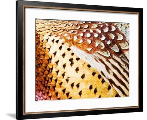 Close Up Pheasant Feathers, Moiese, Montana, USA-Chuck Haney-Framed Art Print