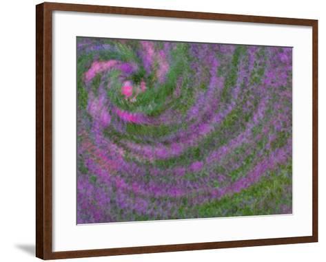 Multiple Exposure Swirl of Purple Petunias, Arlington, Virginia, USA-Corey Hilz-Framed Art Print