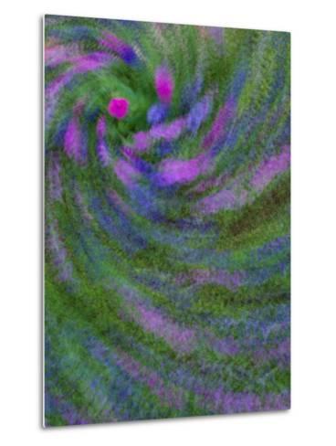 Multiple Exposure Swirl of Purple Petunias, Arlington, Virginia, USA-Corey Hilz-Metal Print