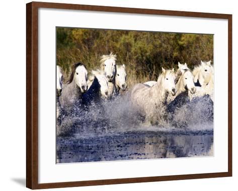 Camargue Horses, Ile Del La Camargue, France-Gavriel Jecan-Framed Art Print