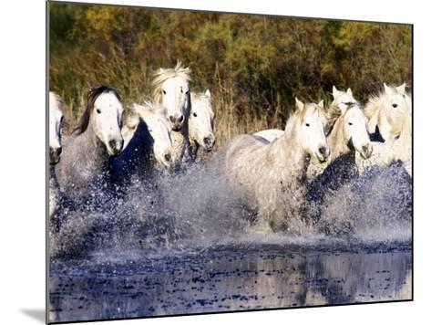 Camargue Horses, Ile Del La Camargue, France-Gavriel Jecan-Mounted Photographic Print