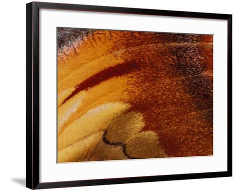 Butterfly Wing Detail-Gavriel Jecan-Framed Art Print