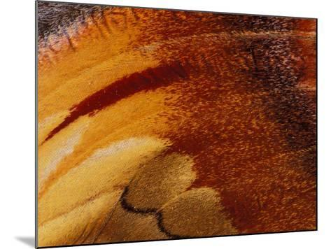 Butterfly Wing Detail-Gavriel Jecan-Mounted Photographic Print